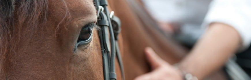 cheval soigné grâce à l'argent colloidal