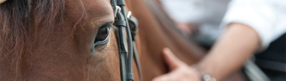 L'argent colloidal pour les chevaux