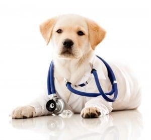 L'argent colloidal pour la santé de nos adorables animaux de compagnie