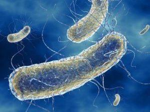 bactérie